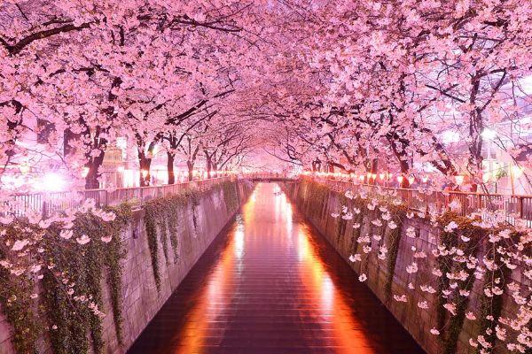 Japan u proleće - moćna magija prirode