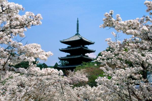 Savršeno proleće u Japanu