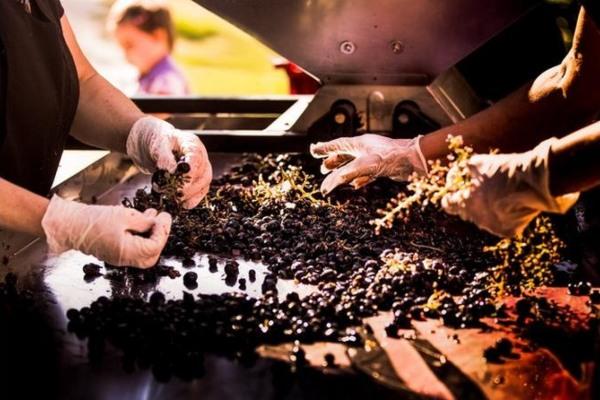 Atomos - savršeno vino koje menja naš pogled na svet