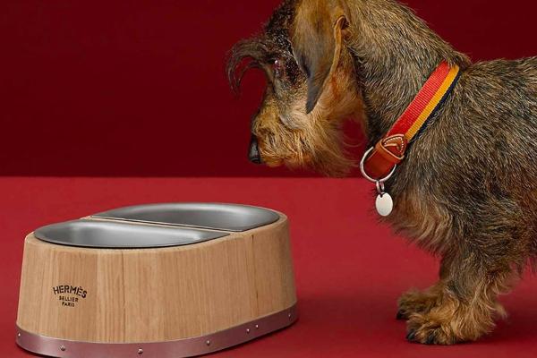Hermes predstavlja najelegantniju činiju za pse