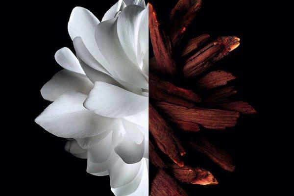 Zavodljiv i očaravajući: nova moderna reinterpretacija Givenchy kultnog L'Interdit parfema