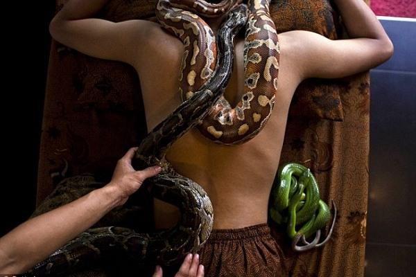 Najstrašniji spa tretman sveta - masaža zmijama